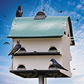 Purple Martin Barn - 49.99