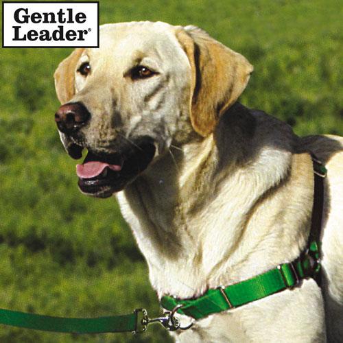 Gentle leader easy walk - Lookup BeforeBuying